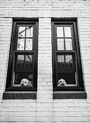 02Assigned_Rick-Webb-1_Pups-in-Window
