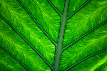 03Assigned_Larry-White-1_Green-Leaf