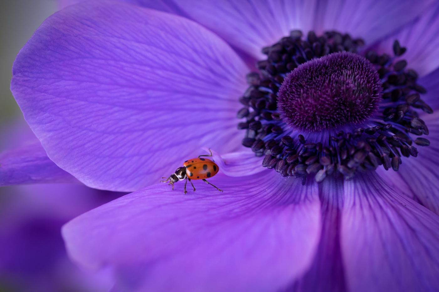 15Assigned_Terry_Miranda_1_Ladybug_loves_purple