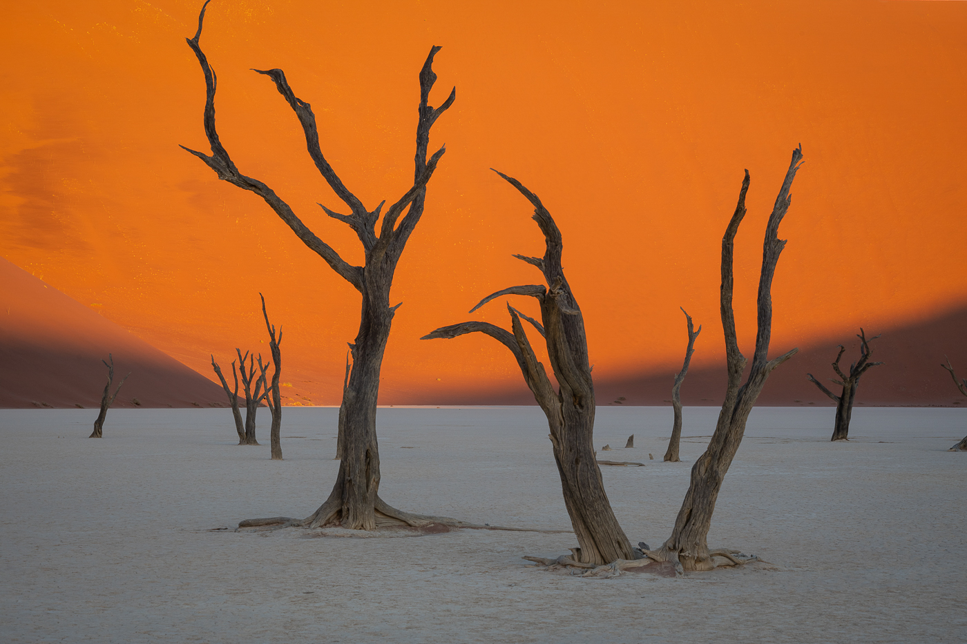 42Open_Lily_Chang_1_Dead_Dancing_trees_in_Sand_Dune