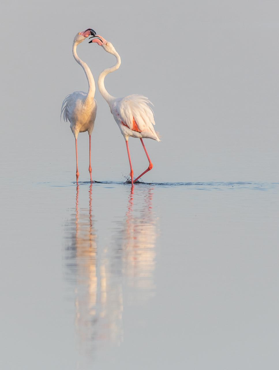 50Open_Lily_Chang_2_Cuddling_Flamingos