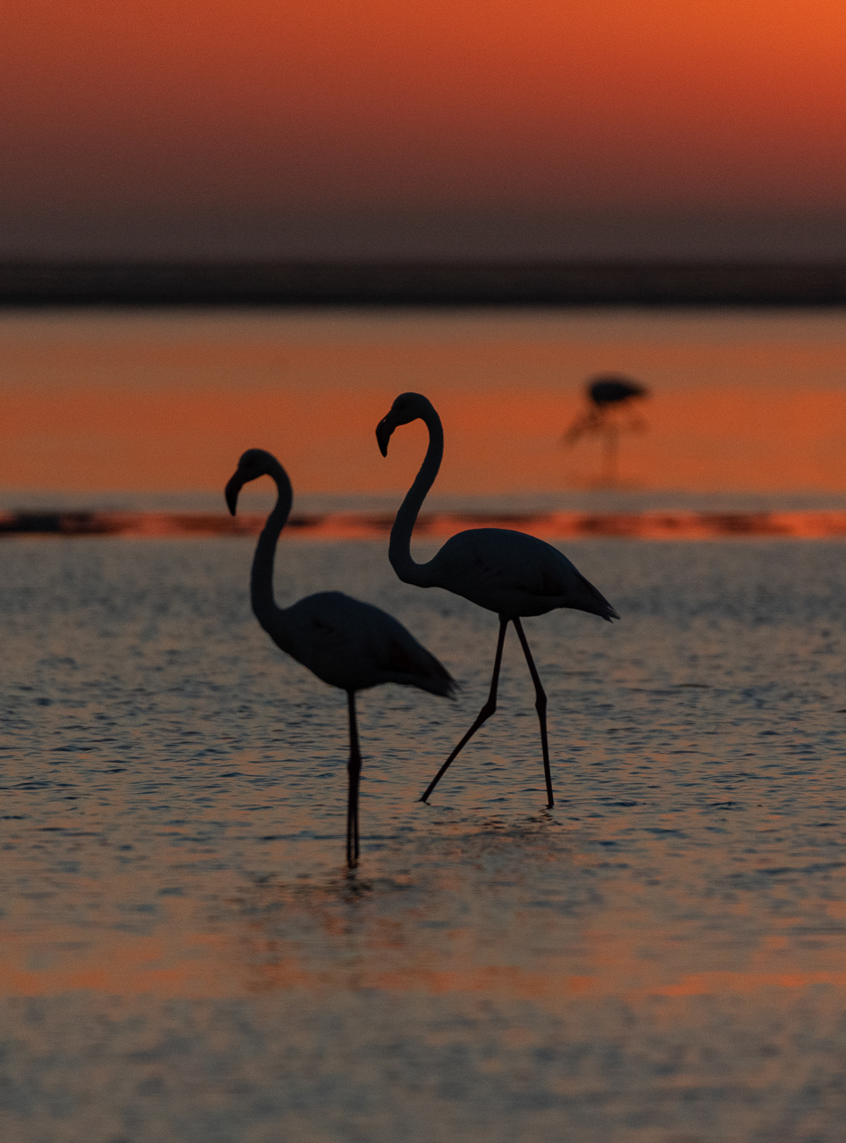 10Lily_Chang_1_Flamingo_Silhouette